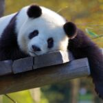中国語で「可愛い」いろんな場面で使えるフレーズ